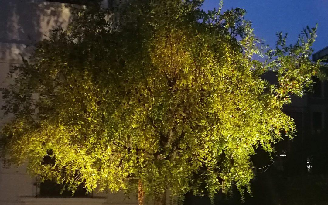 Illuminazione Alberi da Giardino: Consigli e Spunti